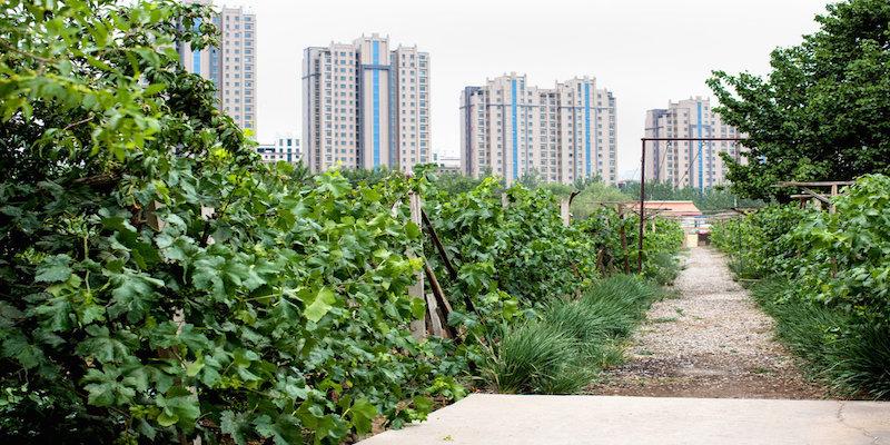 CHINAWINE