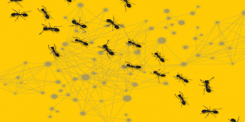Scientists are studying ant colonies to create better networkanalysis