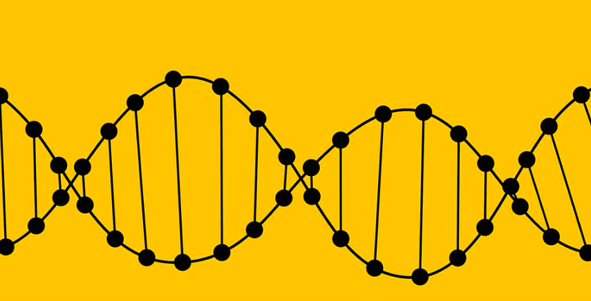 The Effect of Environment on Genes